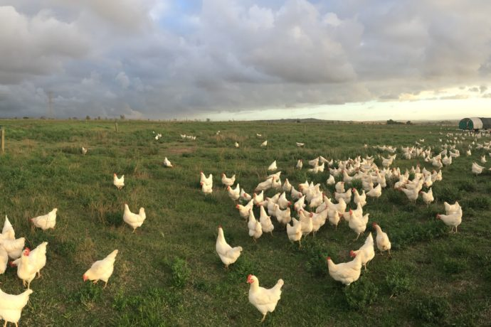 Craig Foster farm photos – May 2018