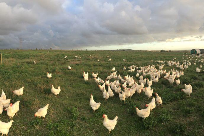 Craig Foster farm photos – May 2018